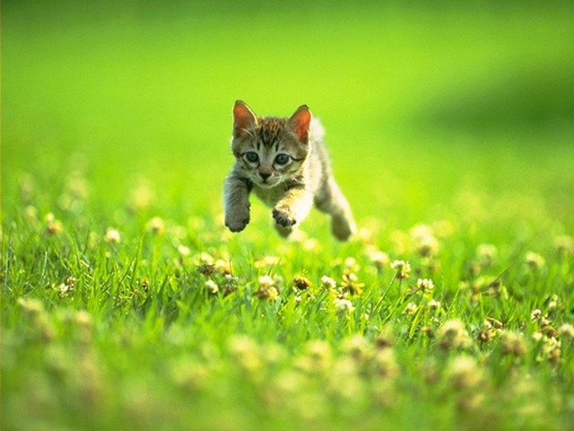 cute-kitten-playing
